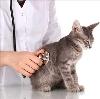 Ветеринарные клиники в Дятьково